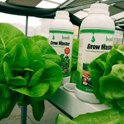 Cặp dung dịch thủy canh Grow Master 2l cho rau ăn lá