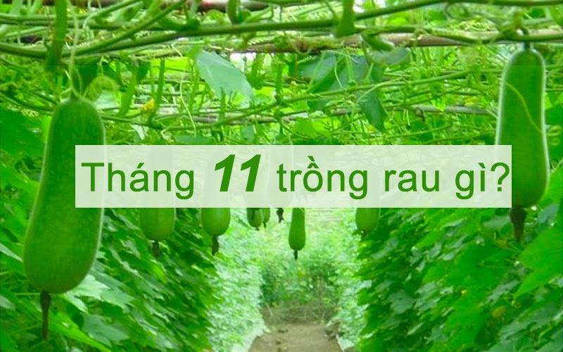 Tháng 11 trồng rau gì? 10 Gợi ý tuyệt vời từ chuyên gia